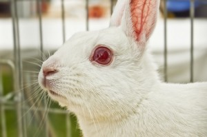 white rabbit melanin vitiligo