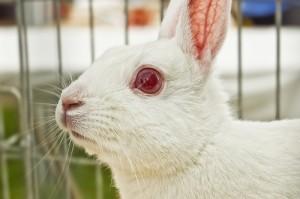 white rabbit melanin vitiligo