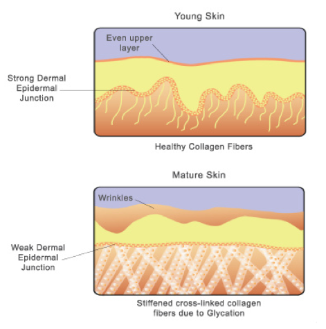 what makes skin stretchy and youthful