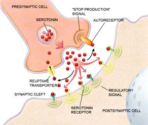psoriasis serotonin transporter sert and depression